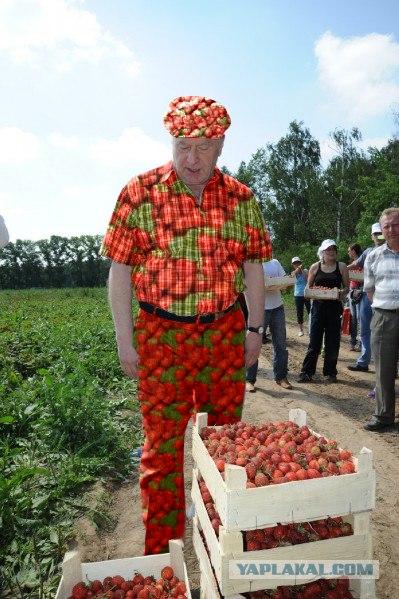 Жириновский и урожай клубники